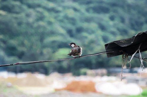birds  landscapes  nature