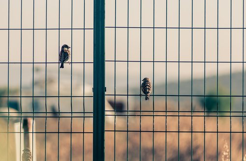 birds  love  obstacle