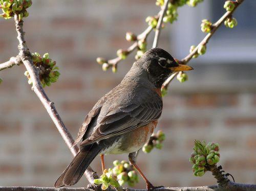 birds ornithology nature