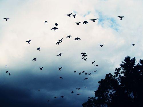 birds sky beast