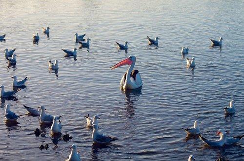 birds  water  waterfowl