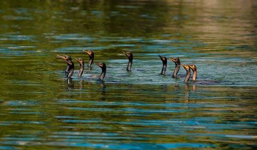 birds  sea birds  marching