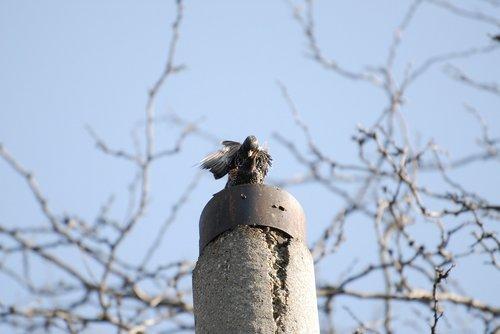 birds  spring  springtime