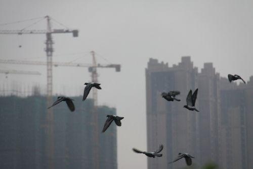 birds changsha tall buildings