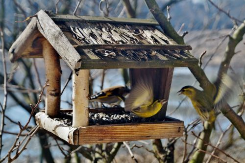 birds the feeder bird feeder