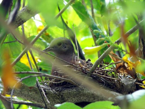 birds nature nest