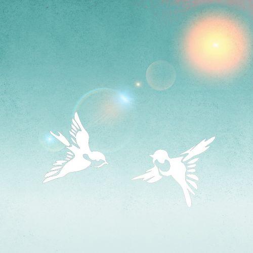 birds peace dove peace