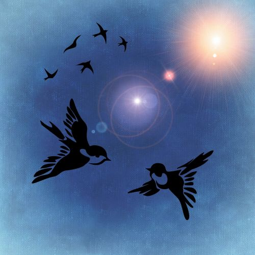 birds bird pair