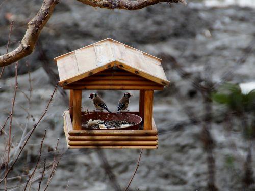 birds bird feeder goldfinch