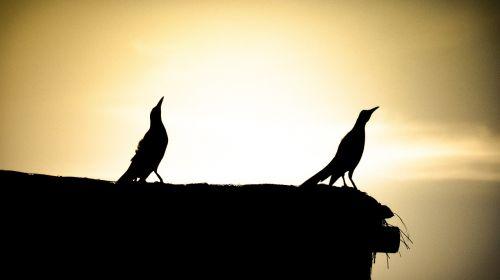 birds landscapes