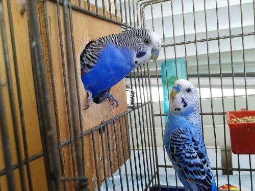 birds cage parrots