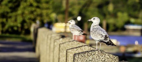 birds minneapolis downtown