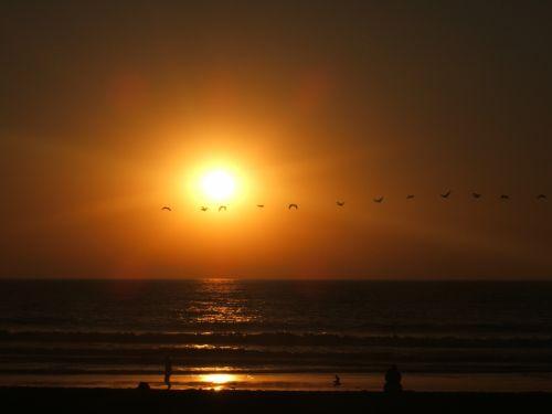 Birds Across A San Diego Sunset