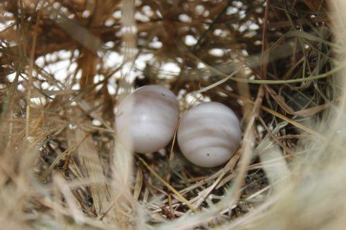 bird's egg nest nature