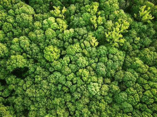 bird's eye view forest aerial view