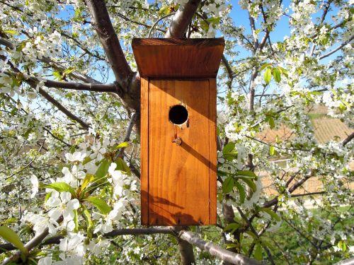 bird's lair bird house odu