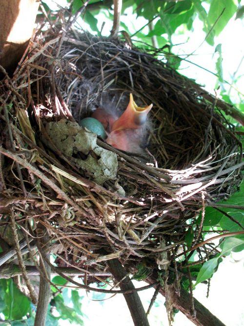 bird's nest nesting place bird breeding