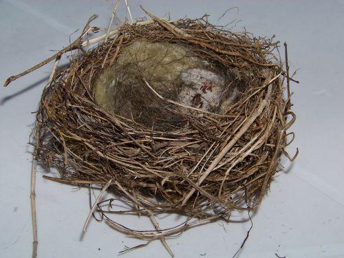 bird's nest nest nesting place
