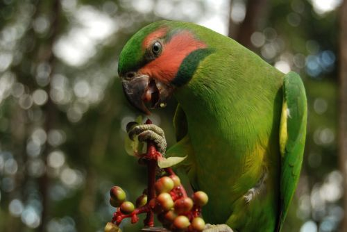 birds of typical cateches of natuna archipelago