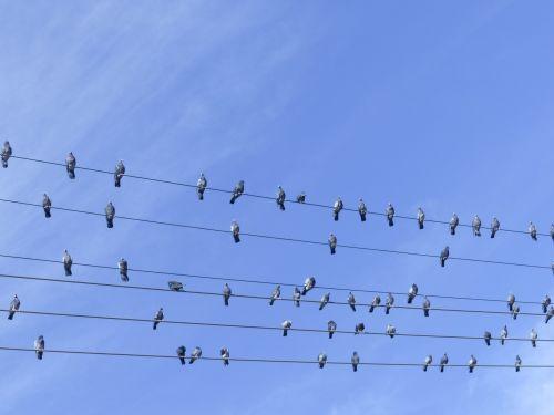 Birds On A Music Staff
