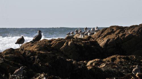 Birds On Rock At Sea