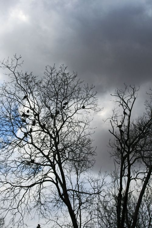 Birds Perched In Bare Trees