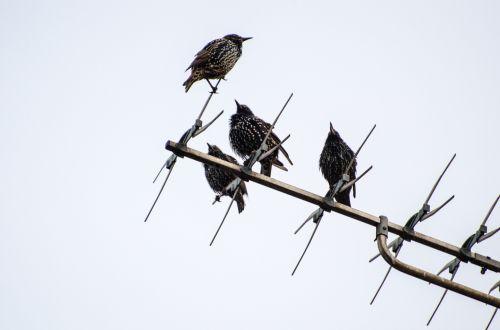 Birds Sitting On Antennas