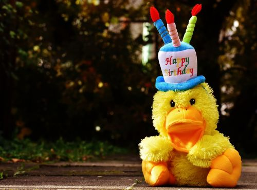 birthday congratulations duck