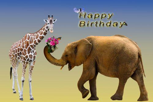 birthday card birthday greeting