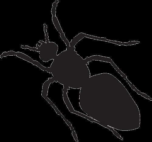 black silhouette ant