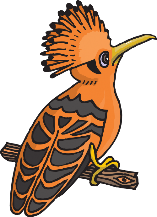 black orange bird