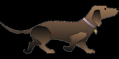 juoda,šuo,naminis gyvūnėlis,gyvūnas,žinduolis,kailis,Taksas,veislė,nemokama vektorinė grafika