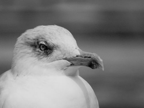 black and white bird sea