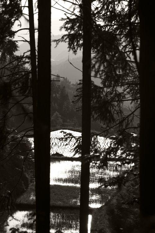 black and white woods slot