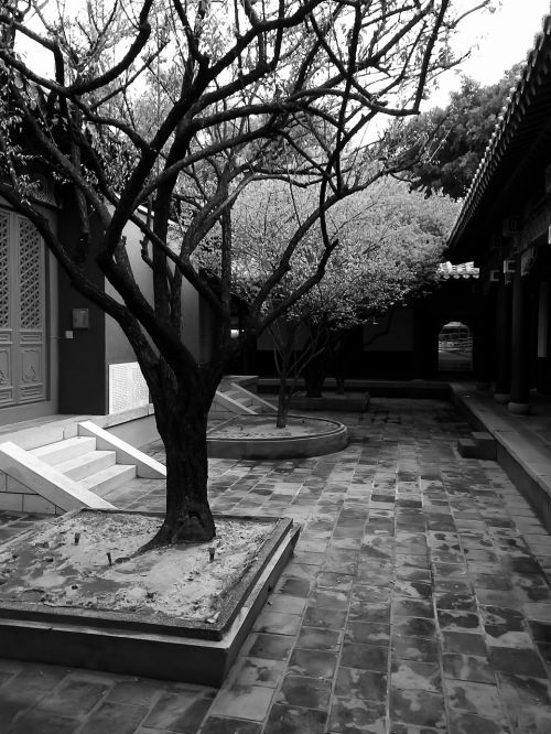 black and white trees taiwan