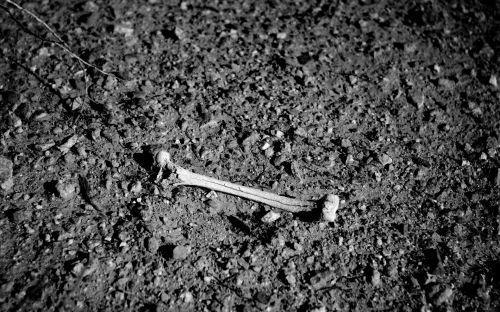 Black And White Bone