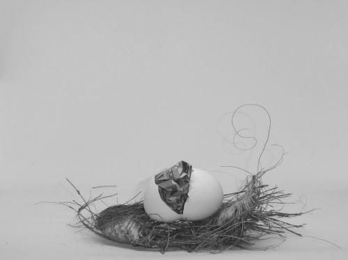 lizdas & nbsp, kiaušinis, pinigai, kiaušinis & nbsp, lukštas, kiaušinis, taupymas, voverė & nbsp, toli, juoda & nbsp, balta, juoda ir balta lizdas kiaušinis