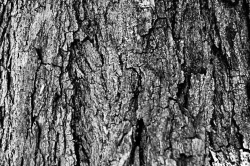juoda & nbsp, balta, medis, žievė, grubus, Grunge, fonas, gritty, liūdnas, dizainas, juodai balta mediena žievė