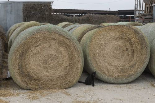 black cat hay bales