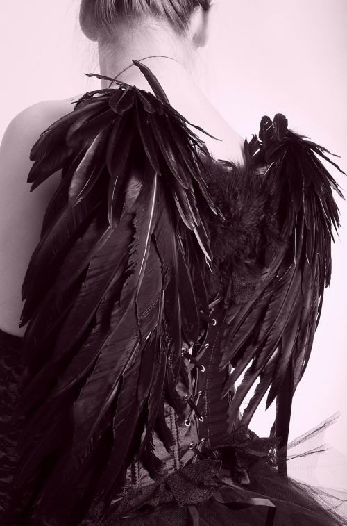 black engel wing feather