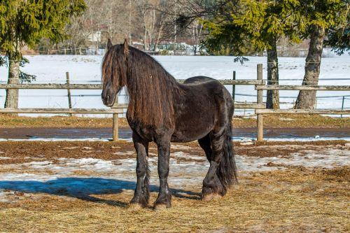 black forest horse hairdresser