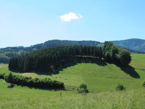 black forest firs view