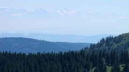 black forest feldberg alpine