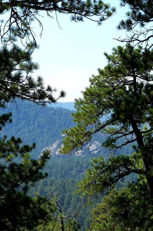 black hills south dakota woods