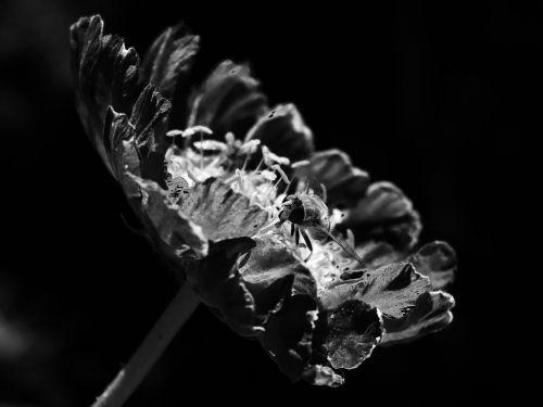 black white flora fly