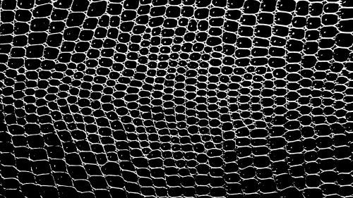 Black White Crocodile Background