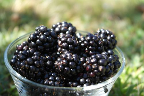 blackberry fruit taste