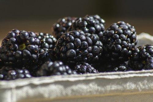 blackberry  berry  fruit