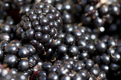 blackberry berry macro