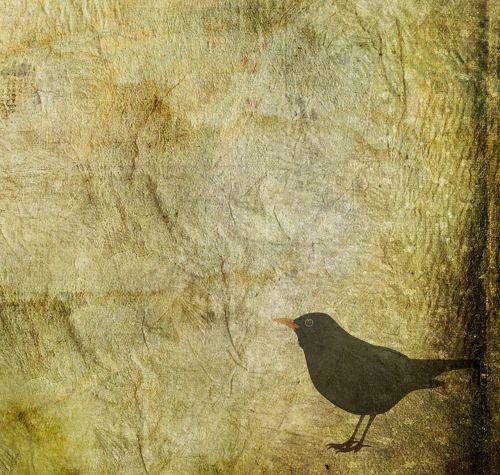 juoda paukštis,paukštis,gyvūnas,fonas,Grunge,susikrimtęs,senas,vintage,Scrapbooking,gamta,laukinė gamta,juoda